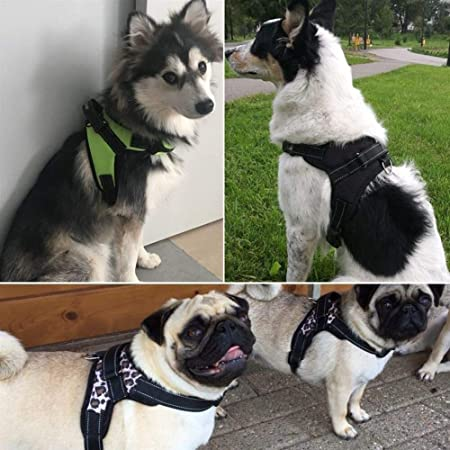 Arnés Para Perros Oxford + Juego De Correas De 120 Cm Para Perros ...