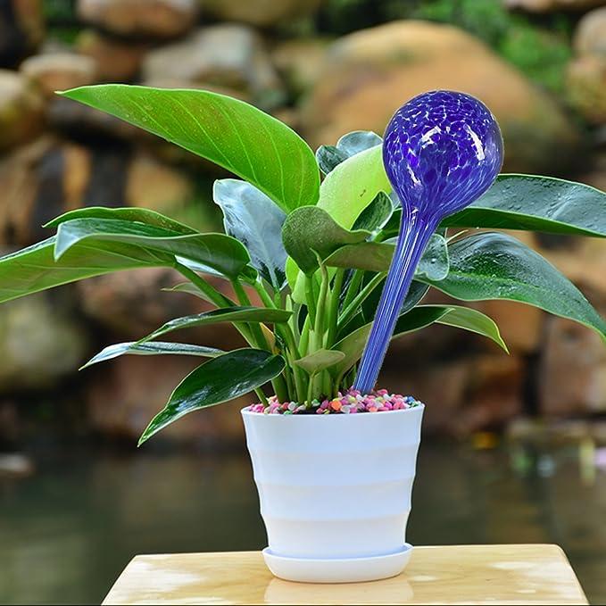 Fansport Blumen Giessen Zimmerpflanzen Bewasserung Bewasserungskugel