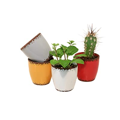 Colorful Succulent Pots - Set of 4 Ceramic Retro Cute Design for Office Home Bookshelf & Small Spaces Cactus Flower and Herb Planter for Live Plants Great for a Gift: Garden & Outdoor