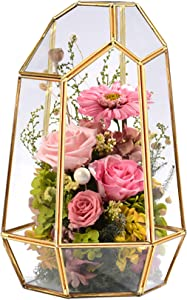 Hamiledyi 10 inches Glass Terrarium Planter, Glass Geometric Succulents Container Box ,Home Tabletop Decorfor Succulent Fern Moss Air Plants