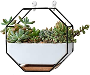 Ivolador Modern Wall Planter, Metal Wire Octagon Design Wall-Mounted Shelves with Ceramic Flower Pot, Air Plant Container Hanging Vase Desktop Succulents Planter-Black