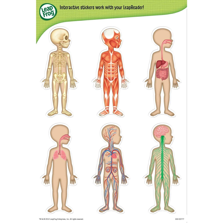 Amazon Leapfrog Leapreader Interactive Human Body Discovery Set