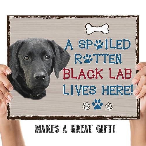Poster Wall Art picture decor animal Decor labrador dog Definition Print
