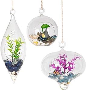 WGVI Glass Hanging Planter Air Fern Terrarium,3 Pack of Plants Hanger Vase for Succulent Moss,Tillandsias and Air Plants, Home Decorations,a Set of Globe,Teardrop,Peach