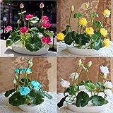 Earth Hopper Bowl Lotus Mix 20 Seeds, Grow in Any Season