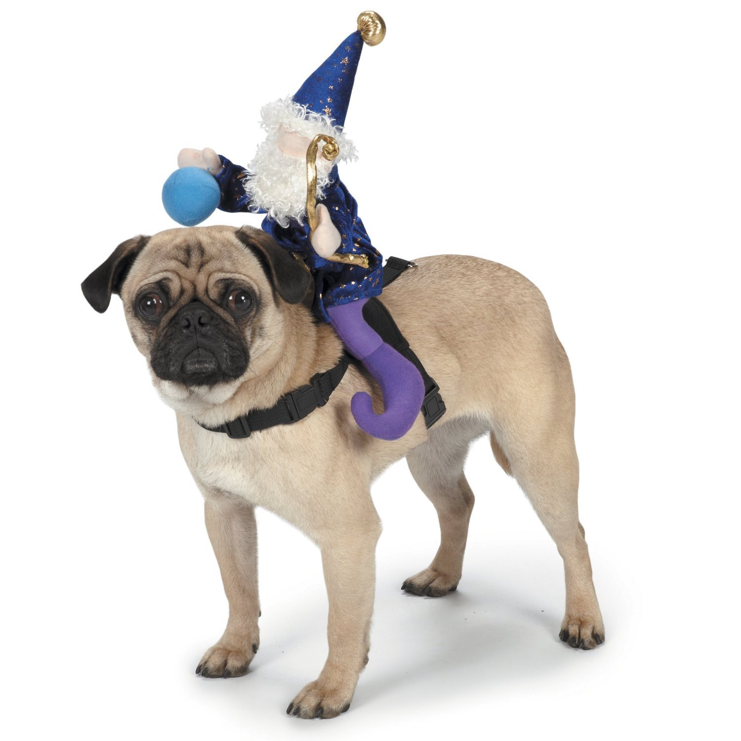 Amazon.com  Zack u0026 Zoey Wizard Saddle Dog Costume Medium  Pet Supplies  sc 1 st  Amazon.com : jockey dog rider pet costume  - Germanpascual.Com