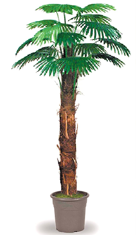 Camerus Palma - Albero Artificiale da Arredo Interno con Tronchi in Fibra Naturale di Cocco - Alto 170 cm