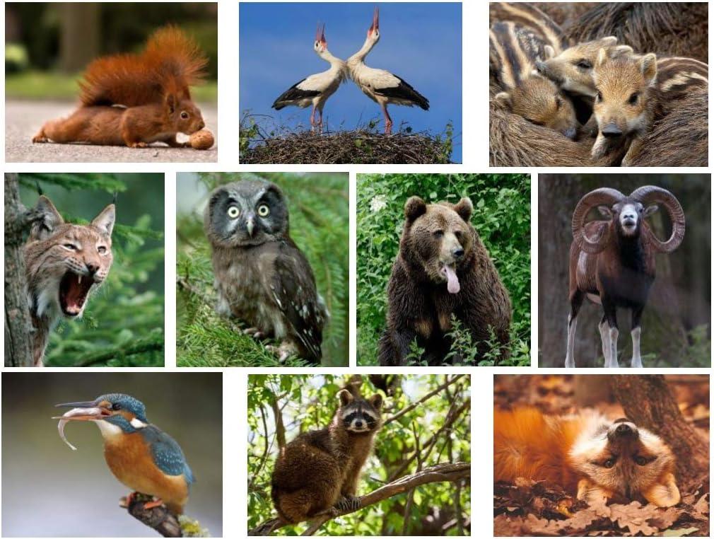Set de tarjetas postales de animales
