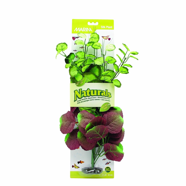 (Extra Large) Marina Naturals Pennywort Silk Plant
