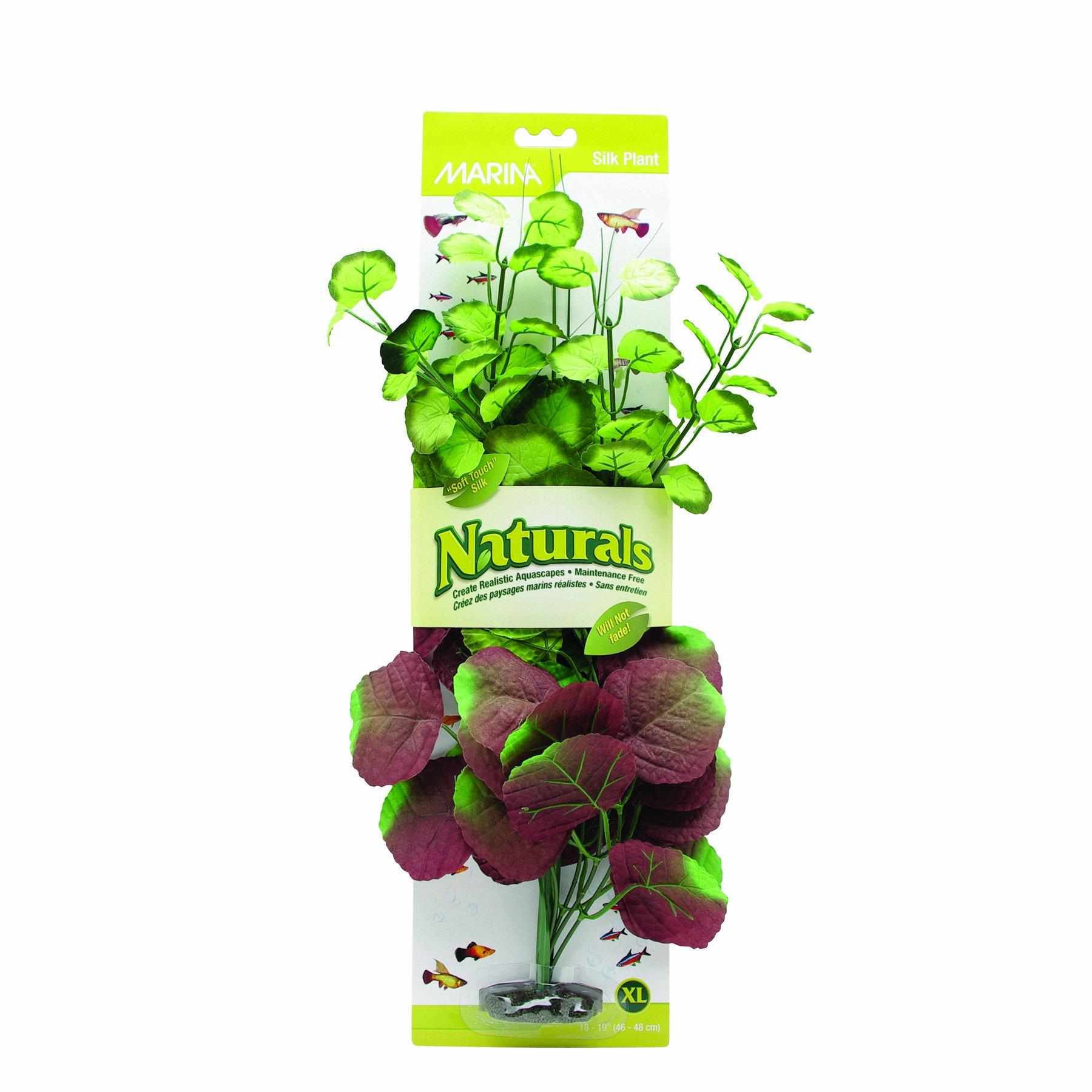 Marina Naturals Pennywort Silk Plant, X-Large by Marina