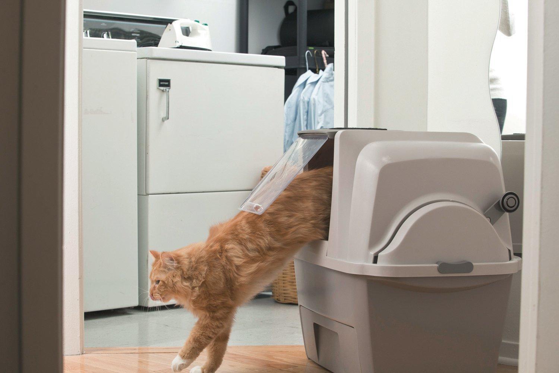 Amazon.com : Caja de arena Hagen SmartSift : Pet Supplies
