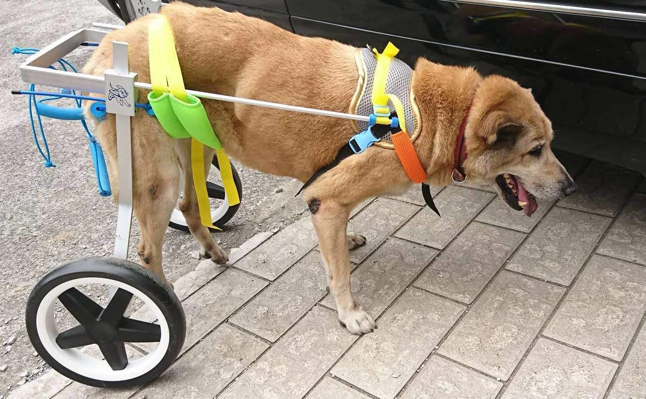 Adjustable Dog Wheelchair (L), Weight 44 to 110 lbs, Hip Height 20''-24'',Width:10.2''-15.8'' hind Legs Rehabilitation by Newlife Mobility (Image #1)