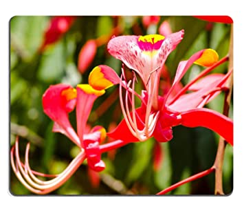 Natural rubber gaming mousepad image id 26550526 exotic red flower natural rubber gaming mousepad image id 26550526 exotic red flower with yellow tips picture taken in mightylinksfo
