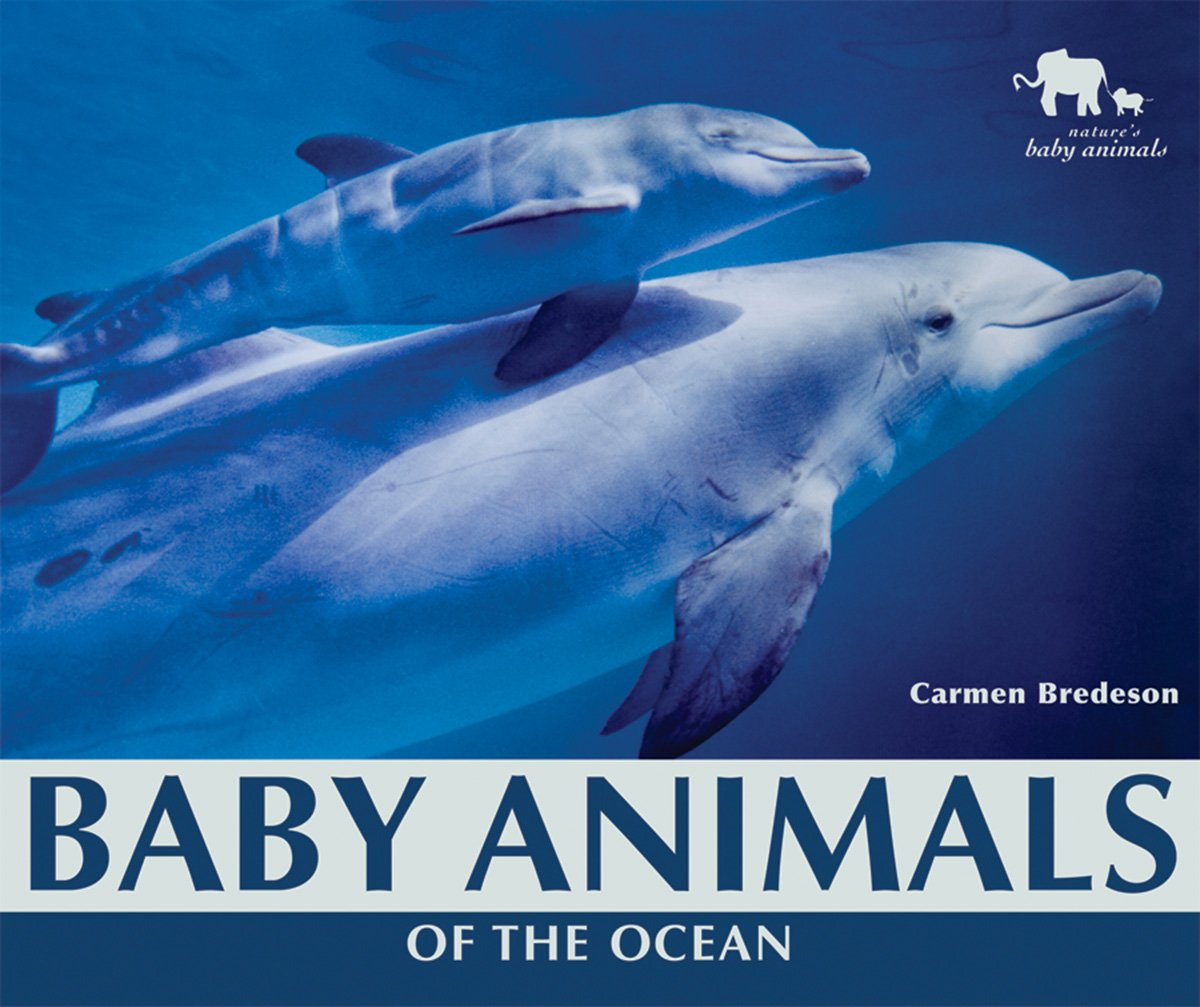 baby animals of the ocean nature u0027s baby animals paper carmen
