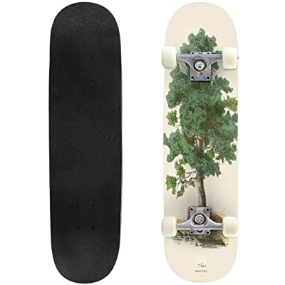 31 inch Skateboard maple tree or acer victorian botanical illustration victorian Complete Longboard Standard Skate board Double Kick Tricks Skateboards for Kids Boys Girls Youths Beginners : Sports & Outdoors