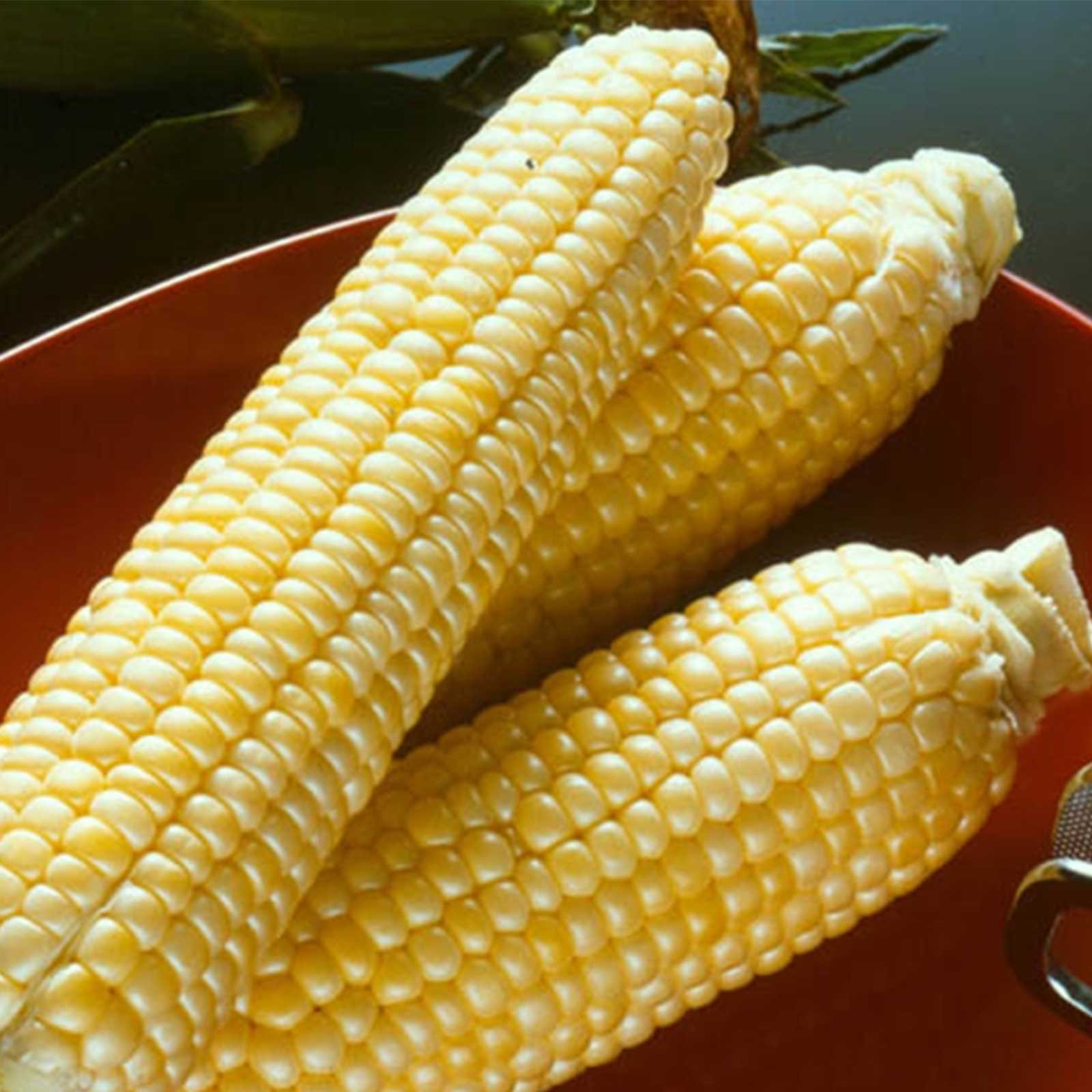 Sugar Buns Hybrid Corn Garden Seed - 5 Lb - Non-GMO, Sugary Enhanced (SE), Vegetable Gardening Seeds - Yellow Sweet Corn by Mountain Valley Seed Company (Image #1)