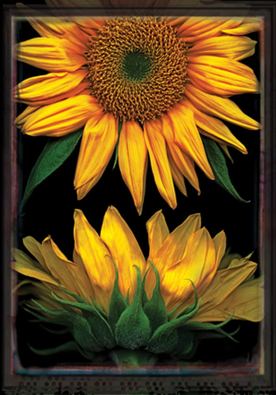 Toland Home Garden Sunflowers on Black 12.5 x 18 Inch Decorative Fall Autumn Flower Portrait Garden Flag