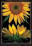 Toland Home Garden Sunflowers on Black 28 x 40 Inch Decorative Fall Autumn Flower Portrait House Flag