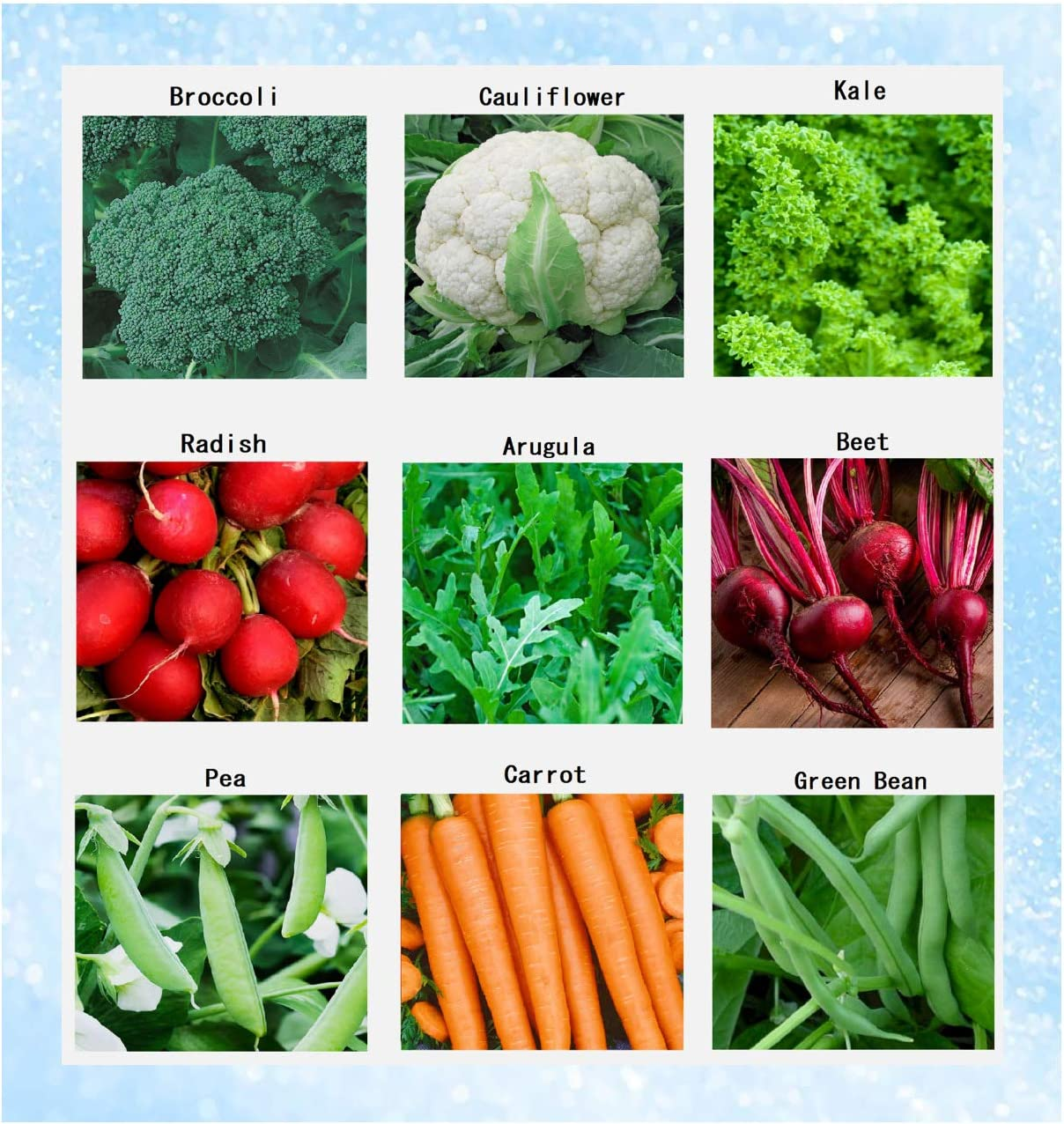 Premium Winter Vegetable Seeds Collection Organic Non-GMO Heirloom Seeds Radish, Pea, Broccoli, Beet, Carrot, Cauliflower, Green Bean, Kale, Arugula, Gardner and Chef Favorites