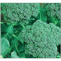 250 Broccoli Seeds | Non-GMO | Fresh Garden Seeds