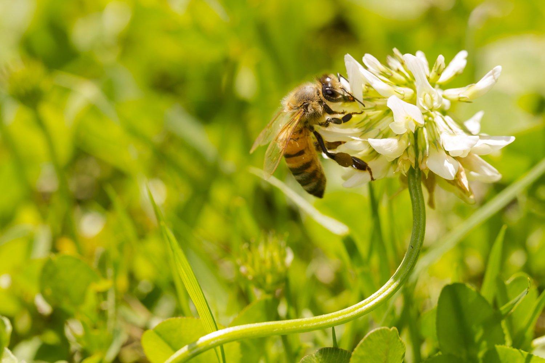 South-Atlantic Transitional Honey Bee Pasture Blend (2.5 acre)