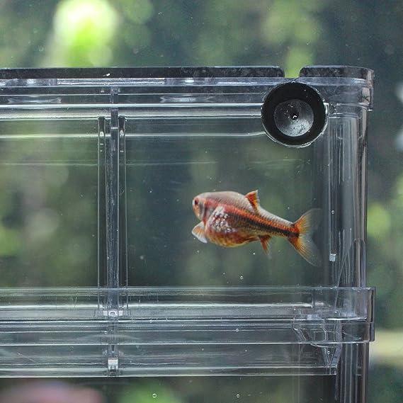 EFORCAR 1pcs Cajas de cría de peces guppys dobles Eclosión ...