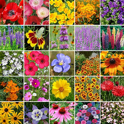 Western Wildflower Seed Mix- 10 Pounds