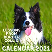 Image for Lessons From Border Collie Calendar 2021: November 2020 - December 2021 Square Photo Book Monthly Planner Calendar With Border Collie Inspirational Quotes
