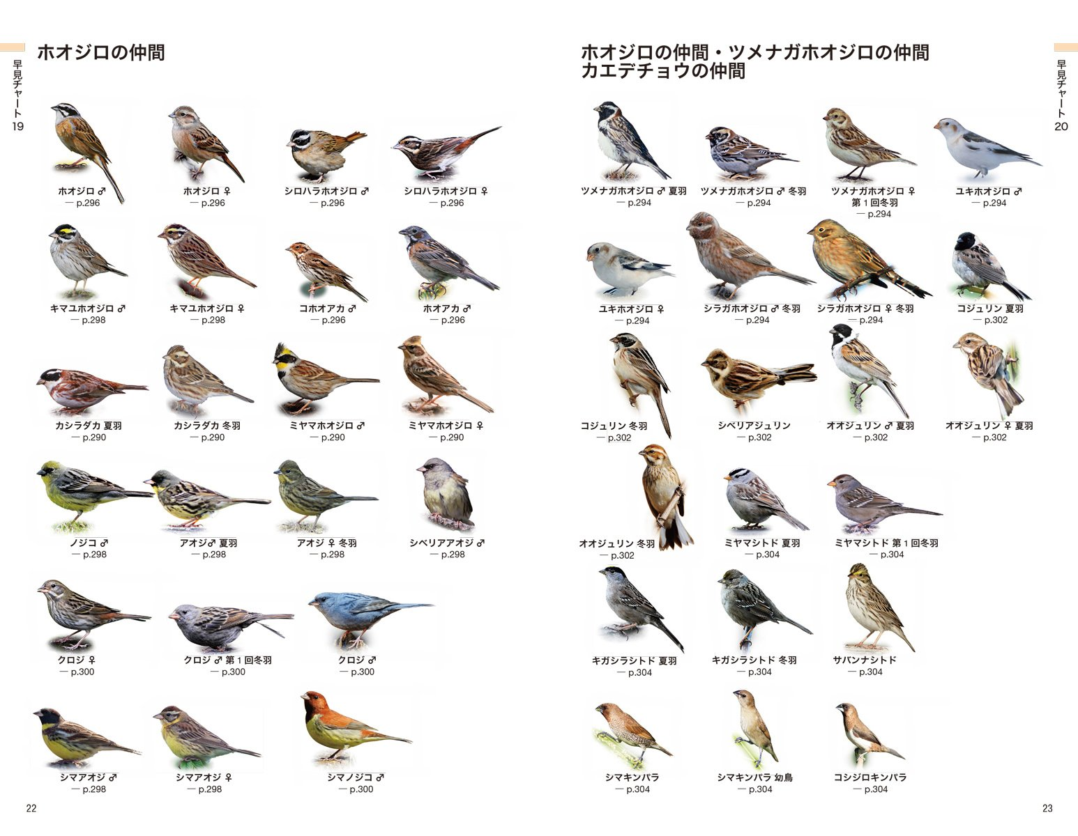 日本の野鳥識別図鑑: 知りたい野...