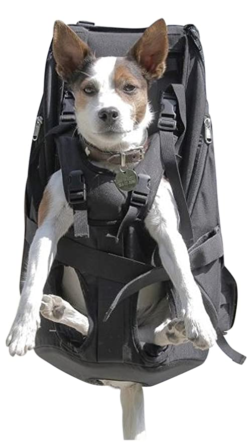 GRAN Bolsa para perros / Arnés de transporte para perros ...