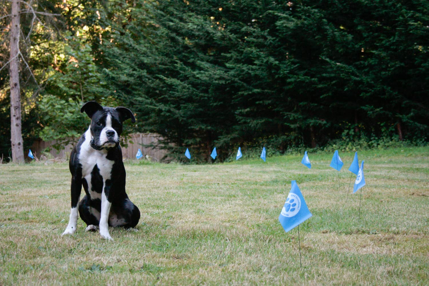 Set of 50 Educator FLAGS-50 Boundary Flags for E-Fence Underground Fence Containment System for Dogs,