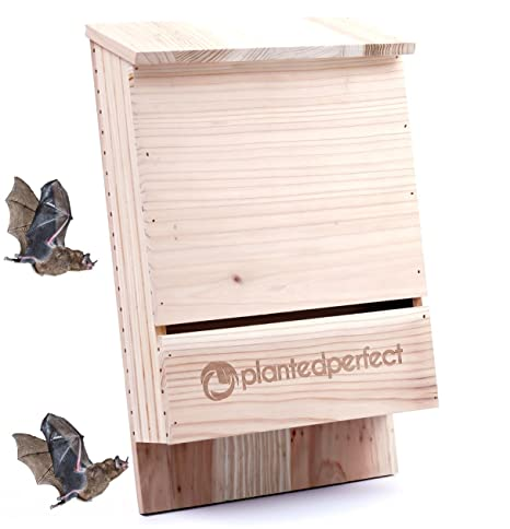 Bat House Pest Control Bats Shelter Protects Home From Mosquitoes And Bugs Dual Chamber Wooden Bat Boxes Built To Last Houses Up To 360 Bats