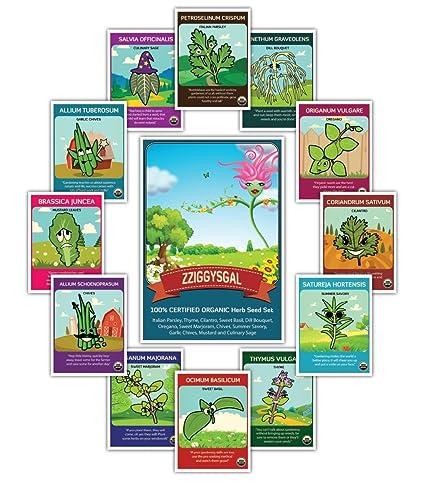 0b95925d0269 Amazon.com   Organic Culinary Herb Seeds (12 pack) - Thyme