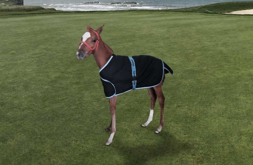TuffRider 1200D Ripstop Foal Adjustable Turnout Blanket