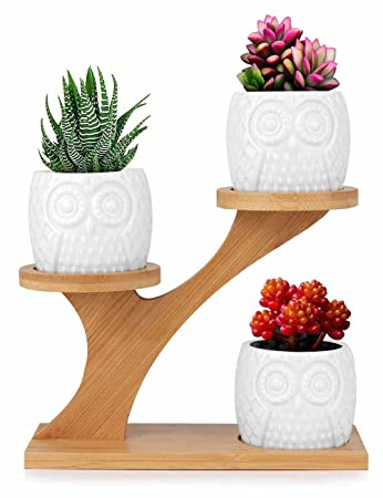 Pflanzenschale für Sukkulenten von Innoter, modern, weiß, Keramik ...