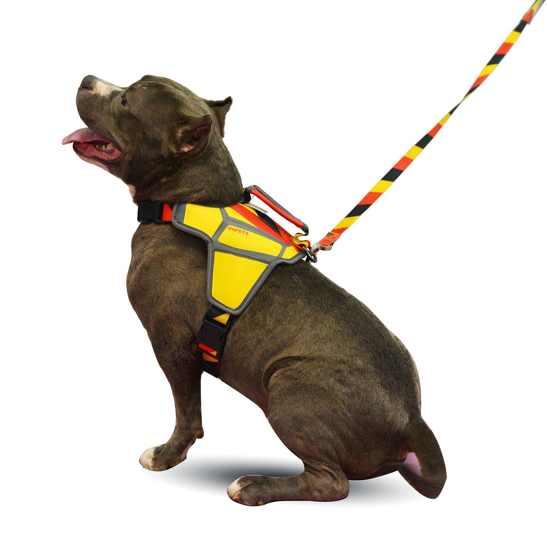 S,ES QQPETS Personalizado Arn/és para Perros con Una Correa de Perro a Juego para Entrenamiento y Caminatas