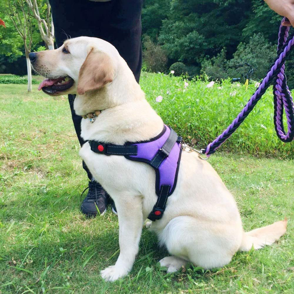 5*56cm Pet Online Collare per cani in pelle di cane di grandi dimensioni con anti-morso di cane resistente collare