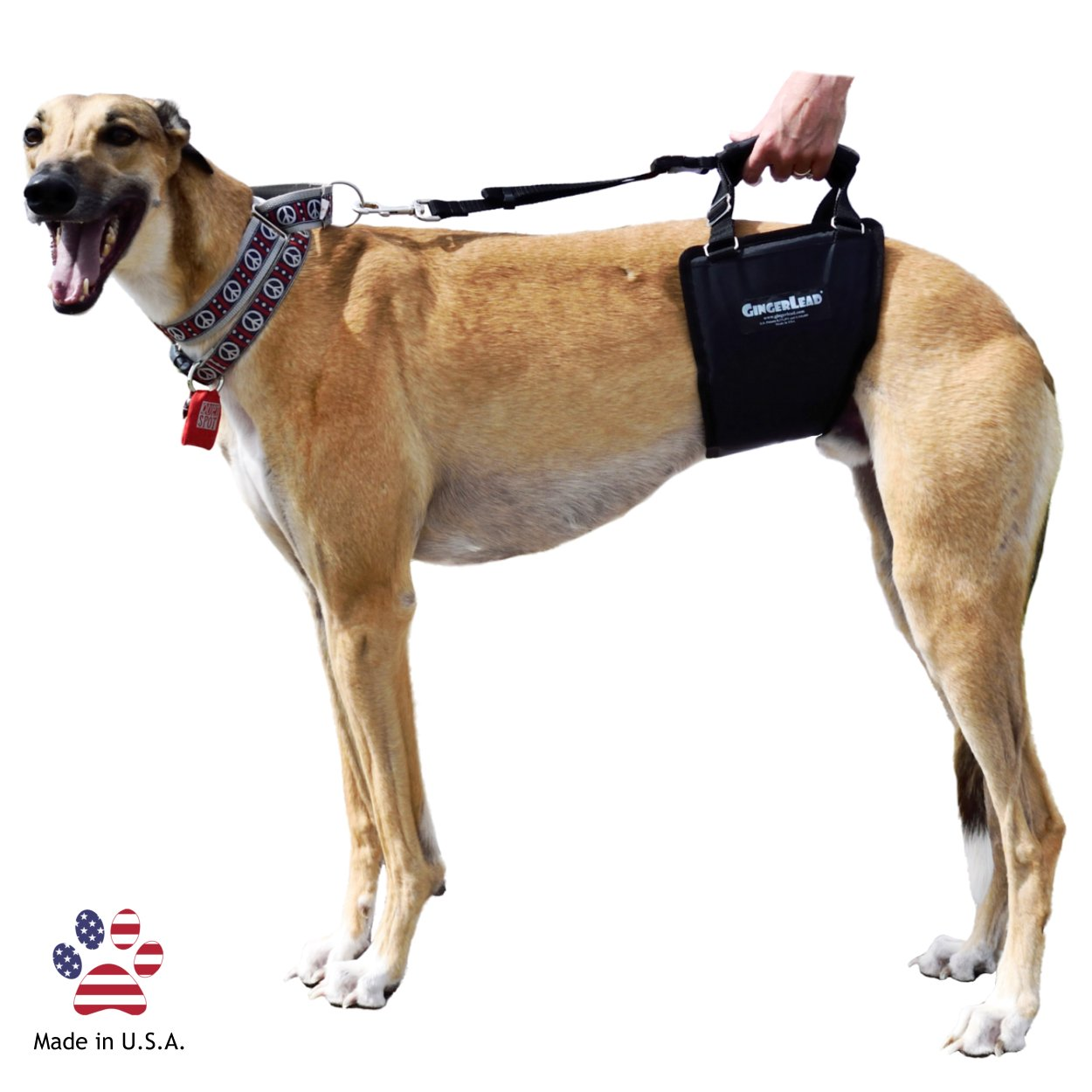 GingerLead Dog Support & Rehabilitation Harness with Stay on Straps - Tall  Male Sling - Ideal for aging, disabled, or injured dogs needing assistance
