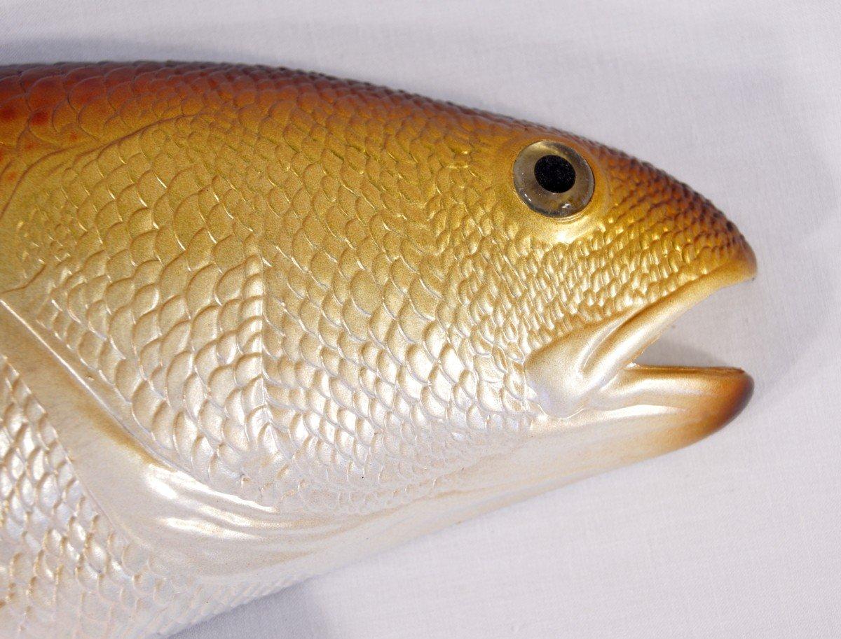 Amazon.com: Jumbo Handpainted Red Drum Fish Wall Mount Decor ...