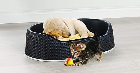 Curver 198799 - Cama para mascotas de tamaño S, color antracita: Amazon.es: Productos para mascotas