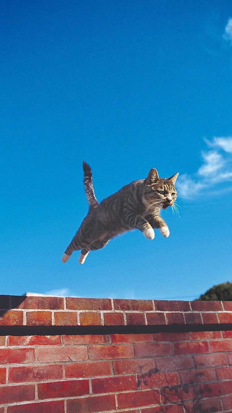 Hika Sur Twitter ねこ 壁紙 無料 壁紙配布 猫 可愛いと