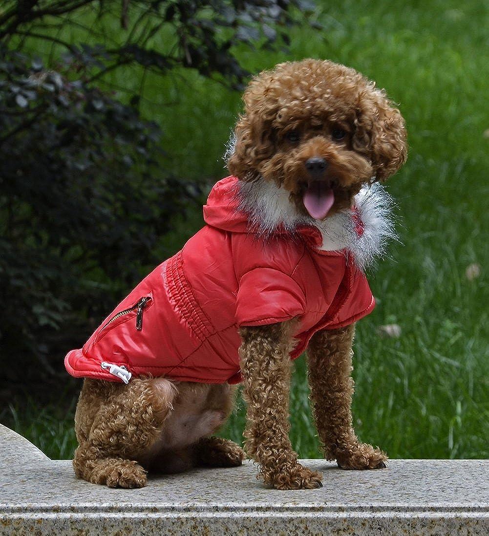 Abrigo para mascotas, engrosamiento de algodón con capucha forrada Slim Cazadora a prueba de viento abrigo de la chaqueta fría Invierno cálido Pet ropa para perros pequeñas Protector de pecho Casual Sport Coat 5 colores y 6 tall