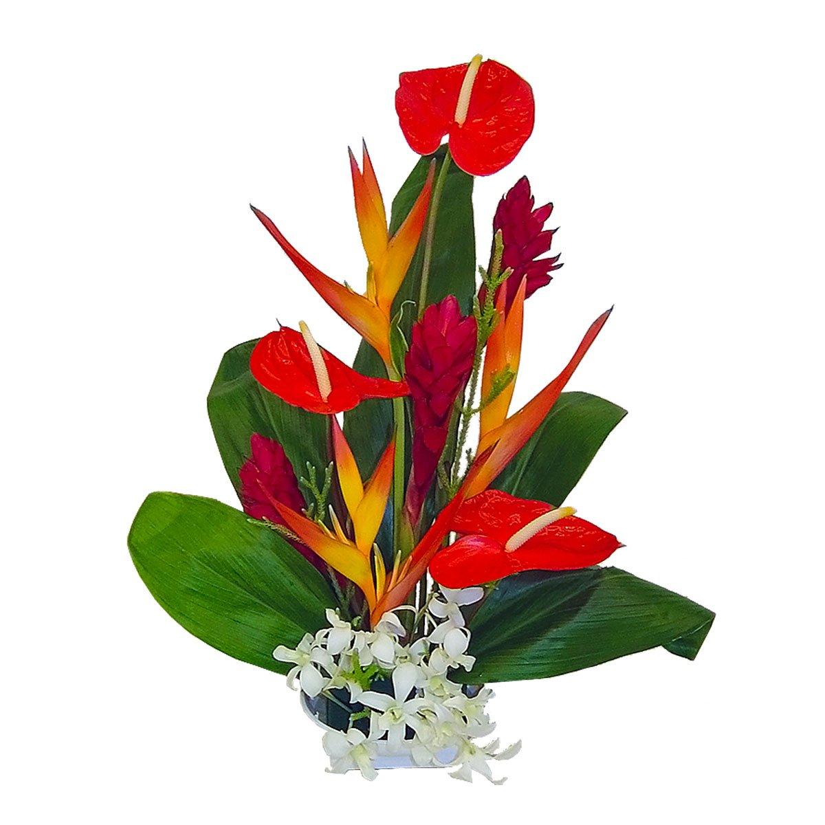Amazon Honokohau Tropical Hawaiian Flowers Fresh Cut Format