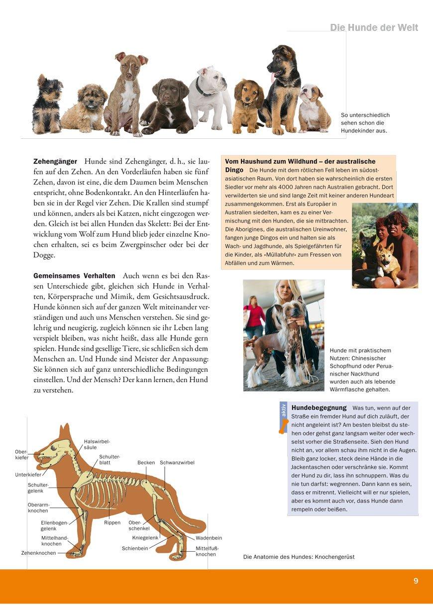 Gemütlich Beckenanatomie Hund Galerie - Menschliche Anatomie Bilder ...
