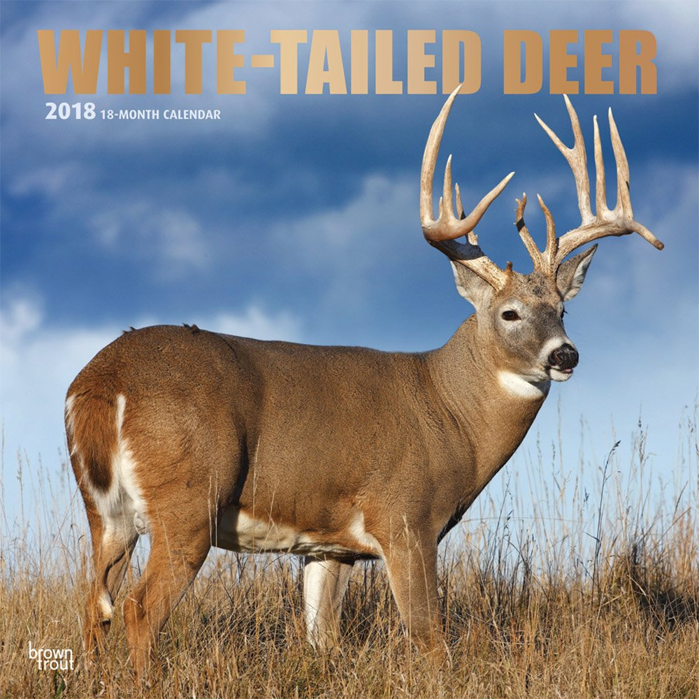 Amazon white tailed deer 2018 12 x 12 inch monthly square wall amazon white tailed deer 2018 12 x 12 inch monthly square wall calendar with foil stamped cover wildlife animals forest hunting multilingual edition fandeluxe Image collections