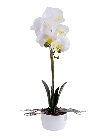 Amazon Louho Phaleanopsis Arrangement With Vase Decorative