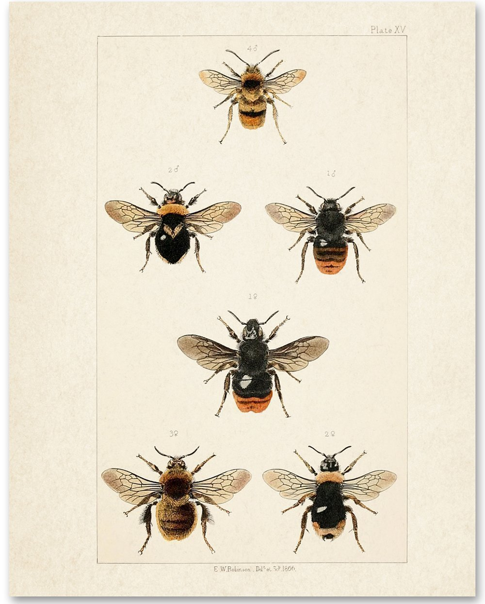 Bees - 11x14 Unframed Art Print - Great Gift for Nature Lovers by Personalized Signs by Lone Star Art