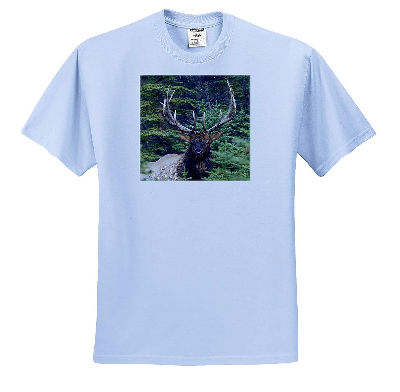 Elk Rocky Mountain Bull Elk 3dRose Danita Delimont Adult T-Shirt XL ts/_313989