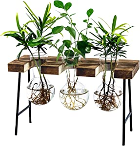 LESES Air Plant Terrarium, Desktop Glass Planter Bulb Glass Vase with Wooden Stand Propagation Station for Hydroponics Plants Home Office Garden Decor