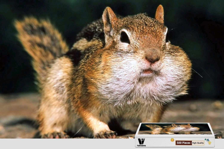正規店仕入れの pigbangbang、20.6 X 15.1インチ X、ハンドメイドintellectivゲームプレミアム木製DIY接着のJigsaw Nice Painting – Cute – Cute Squirrel – 500ピースジグソーパズル B07CKFRQBR, HoneyBoo(ハニーブー):8c09fbf0 --- fenixevent.ee